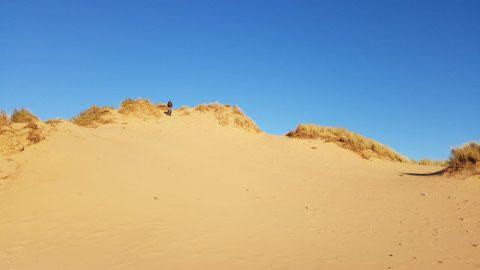 Sandscale Dunes
